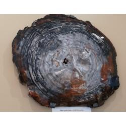 Bois fossile